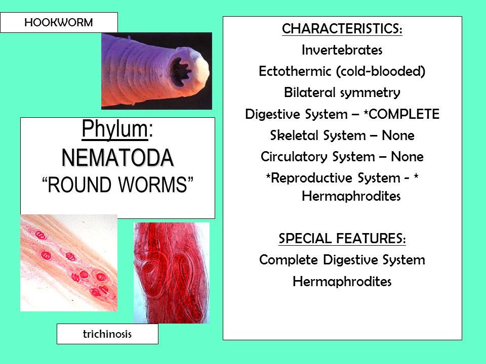 Phylum: NEMATODA ROUND WORMS