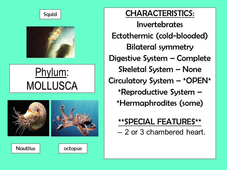 Phylum: MOLLUSCA CHARACTERISTICS: Invertebrates
