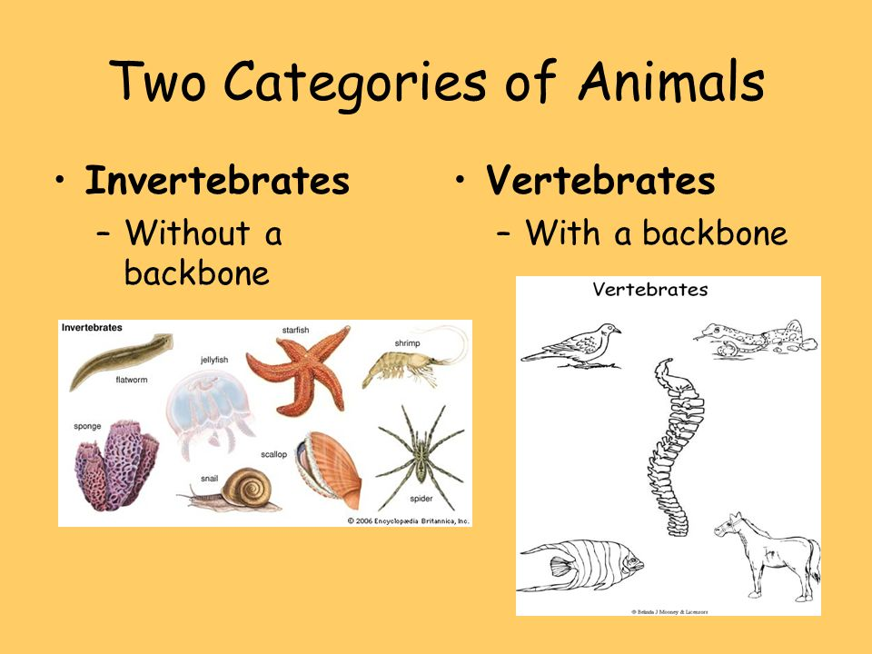 Two Categories of Animals