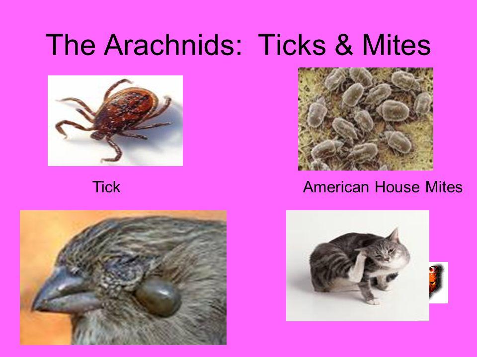 The Arachnids: Ticks & Mites