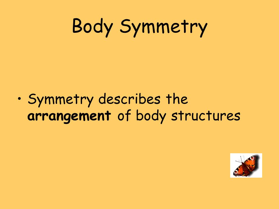 Body Symmetry Symmetry describes the arrangement of body structures