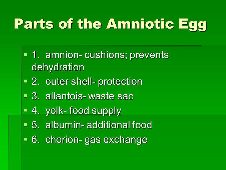 Parts of the Amniotic Egg