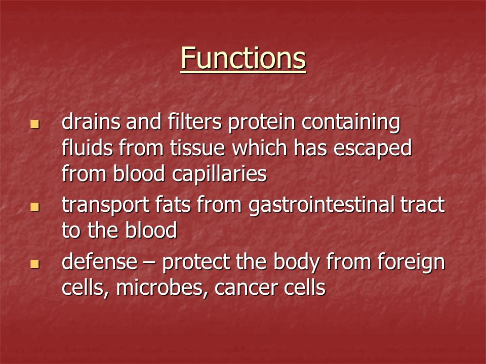 Functions drains and filters protein containing fluids from tissue which has escaped from blood capillaries.