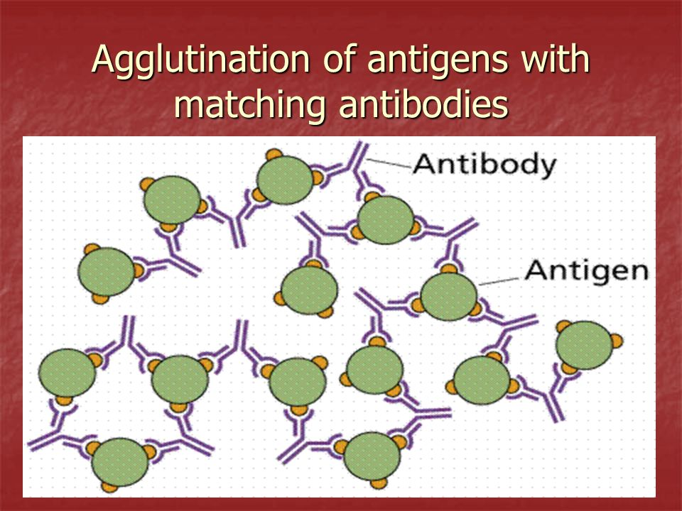 Agglutination of antigens with matching antibodies