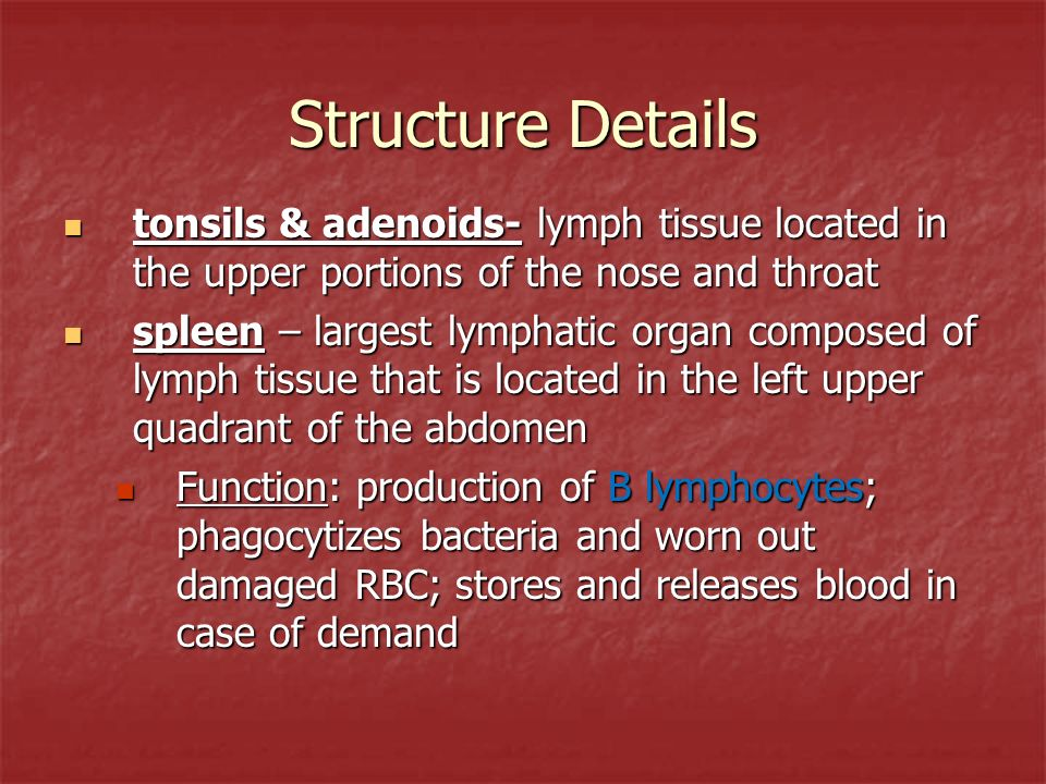 Structure Details tonsils & adenoids- lymph tissue located in the upper portions of the nose and throat.