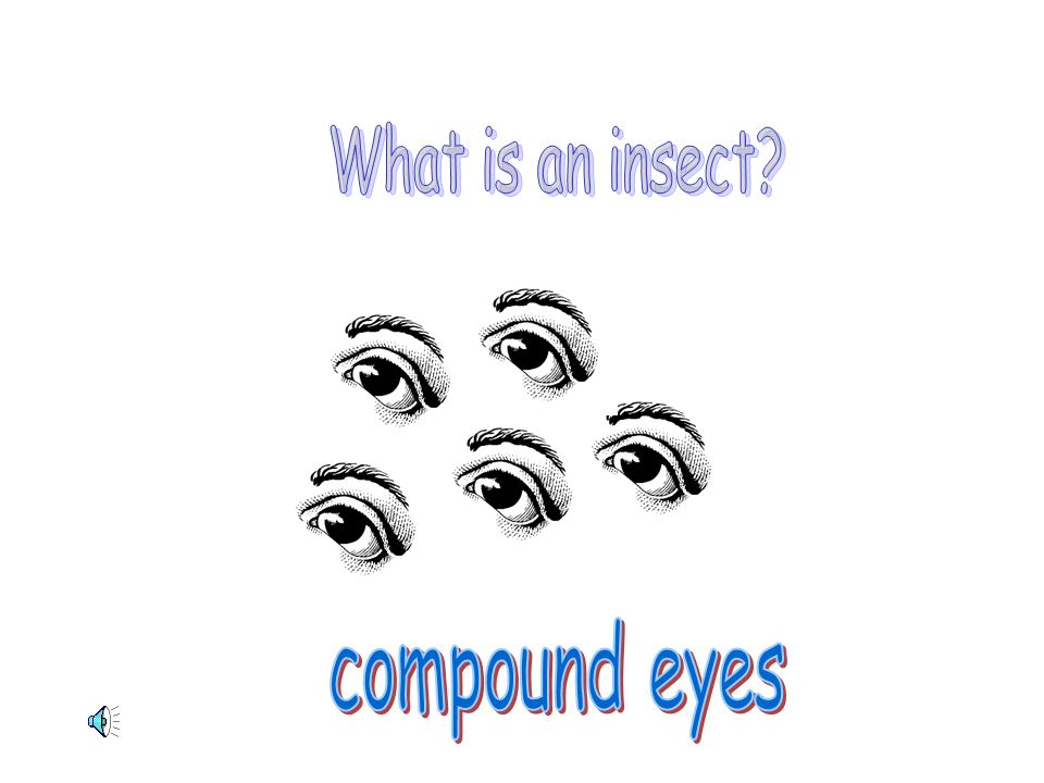 What is an insect compound eyes