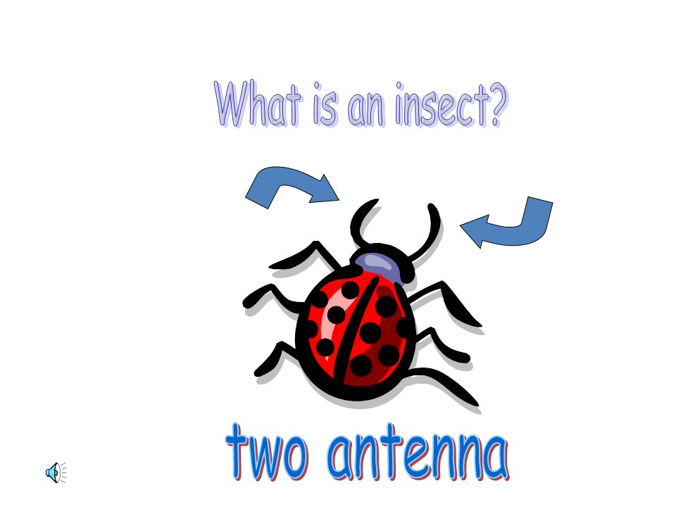 What is an insect two antenna