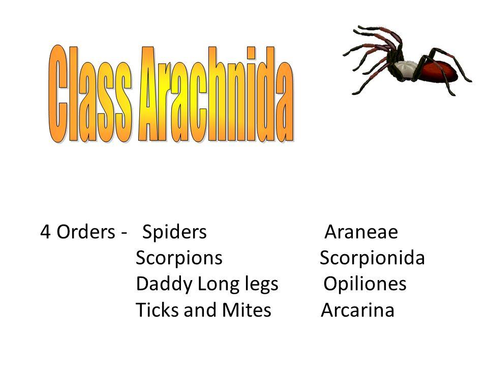 Class Arachnida Scorpions Scorpionida Daddy Long legs Opiliones