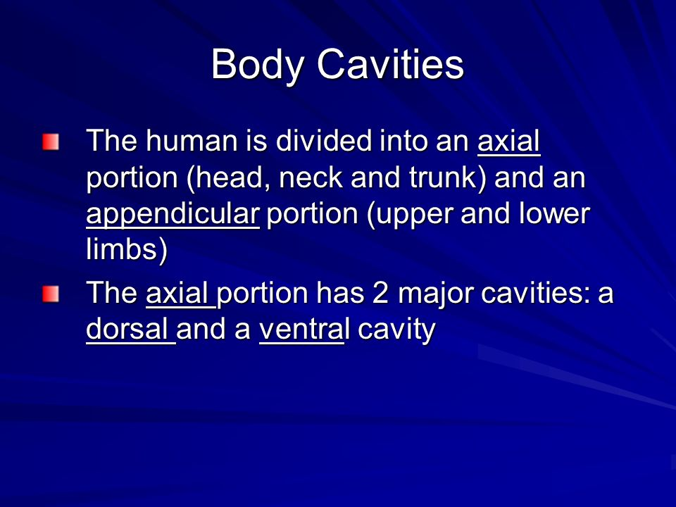 Body CavitiesThe human is divided into an axial portion (head, neck and trunk) and an appendicular portion (upper and lower limbs)