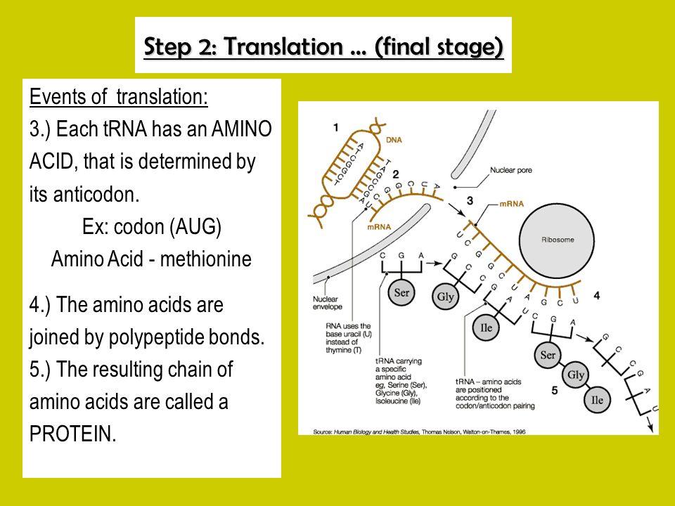 Step 2: Translation … (final stage)