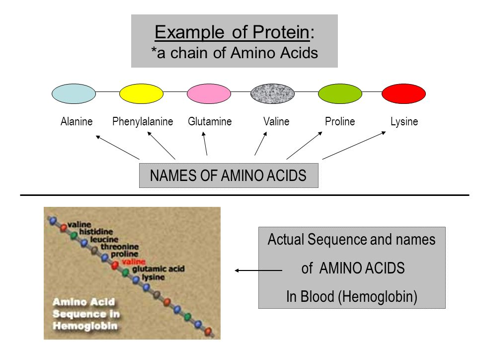 Example of Protein: *a chain of Amino Acids