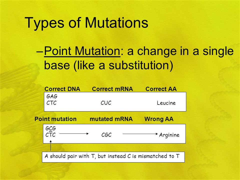 Types of Mutations Point Mutation: a change in a single base (like a substitution) GAG.