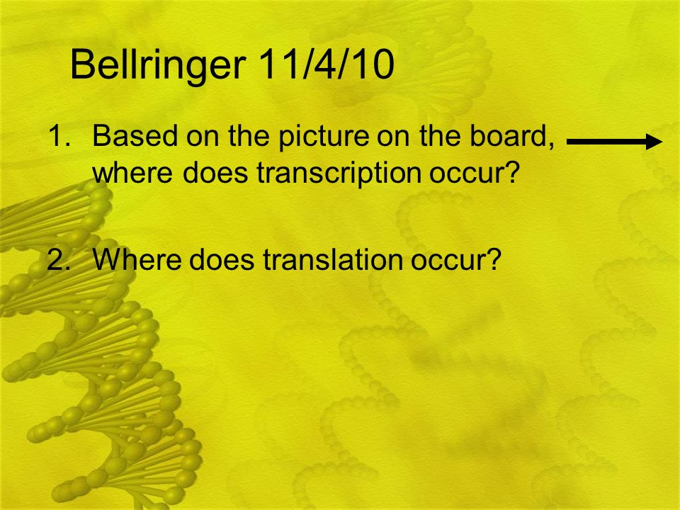 Bellringer 11/4/10 Based on the picture on the board, where does transcription occur.