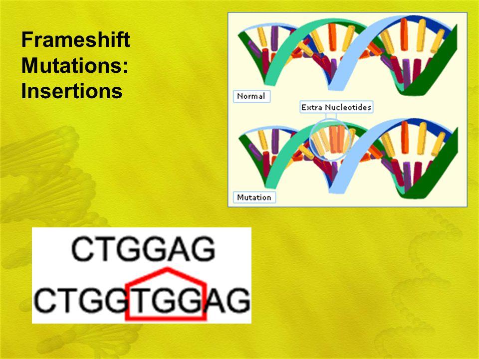 Frameshift Mutations: Insertions