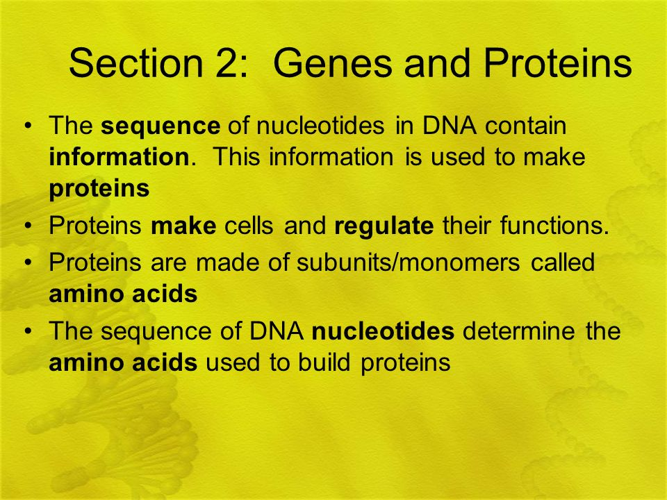 Section 2: Genes and Proteins
