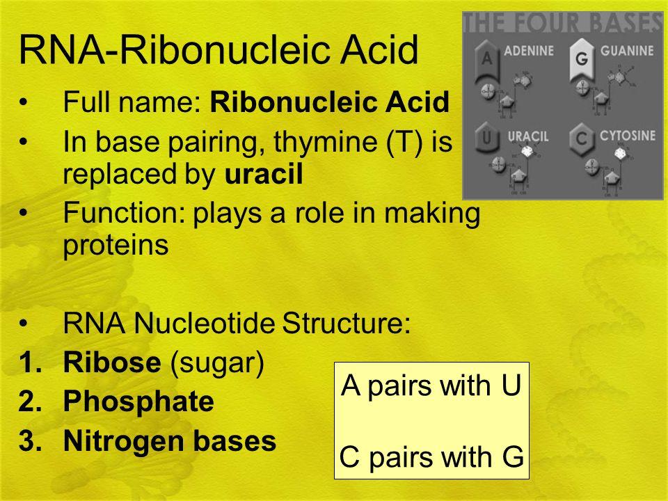 RNA-Ribonucleic Acid Full name: Ribonucleic Acid