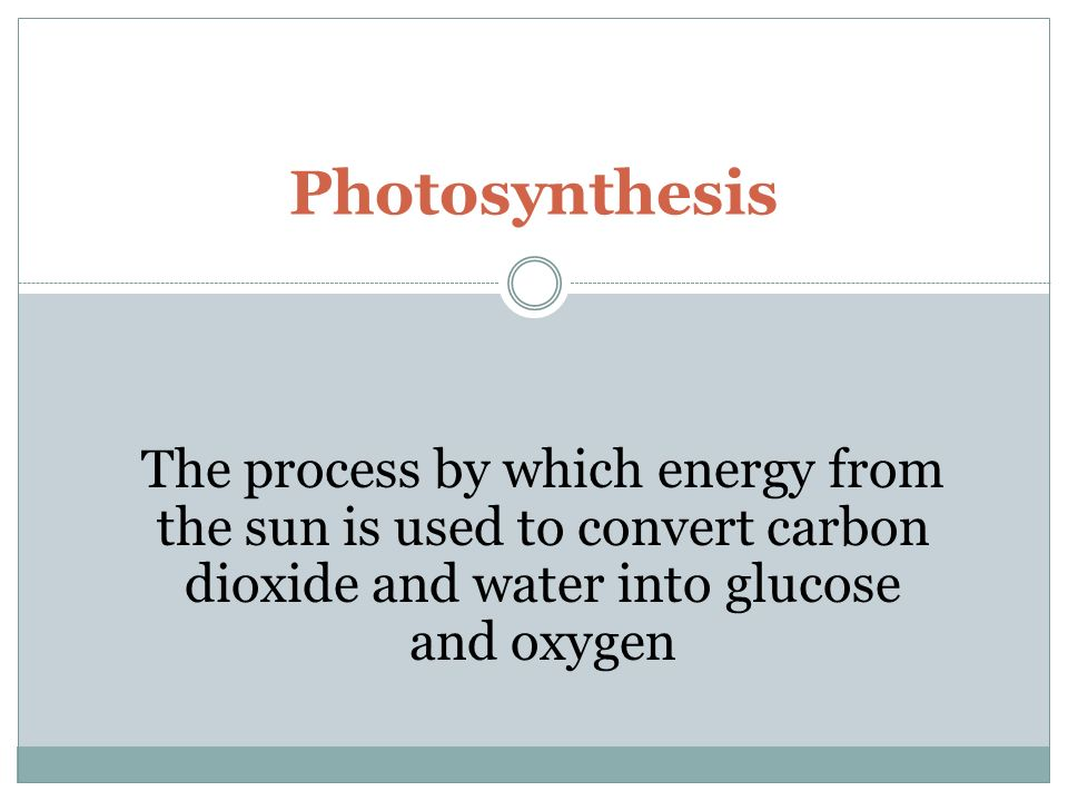 Photosynthesis The process by which energy from the sun is used to convert carbon dioxide and water into glucose and oxygen.