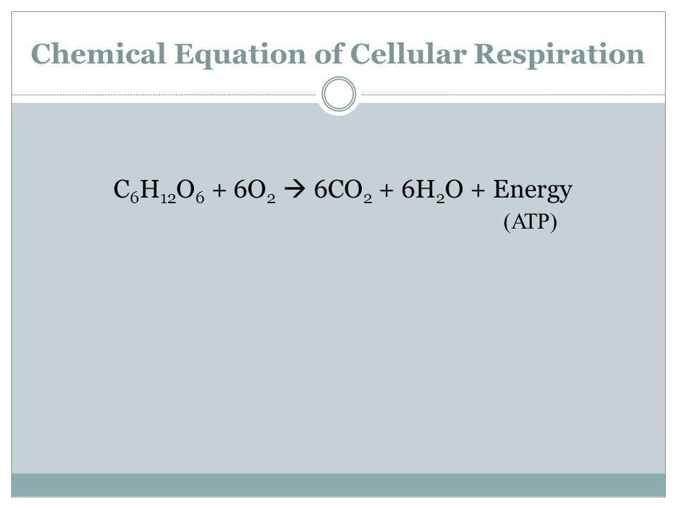 Chemical Equation of Cellular Respiration