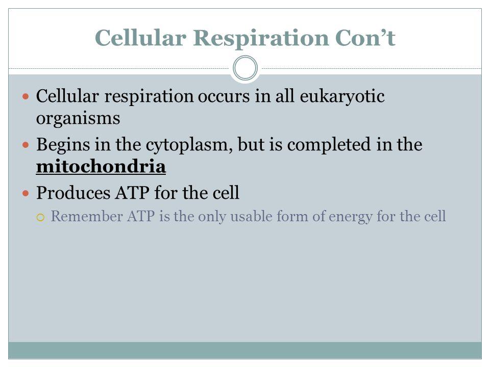 Cellular Respiration Con't