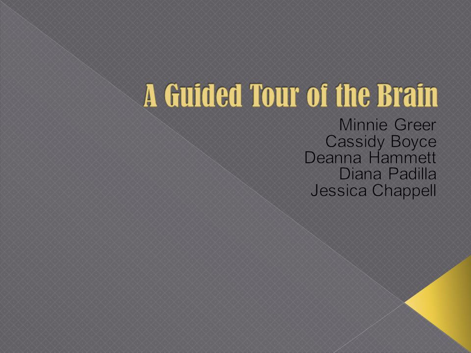 A Guided Tour of the Brain