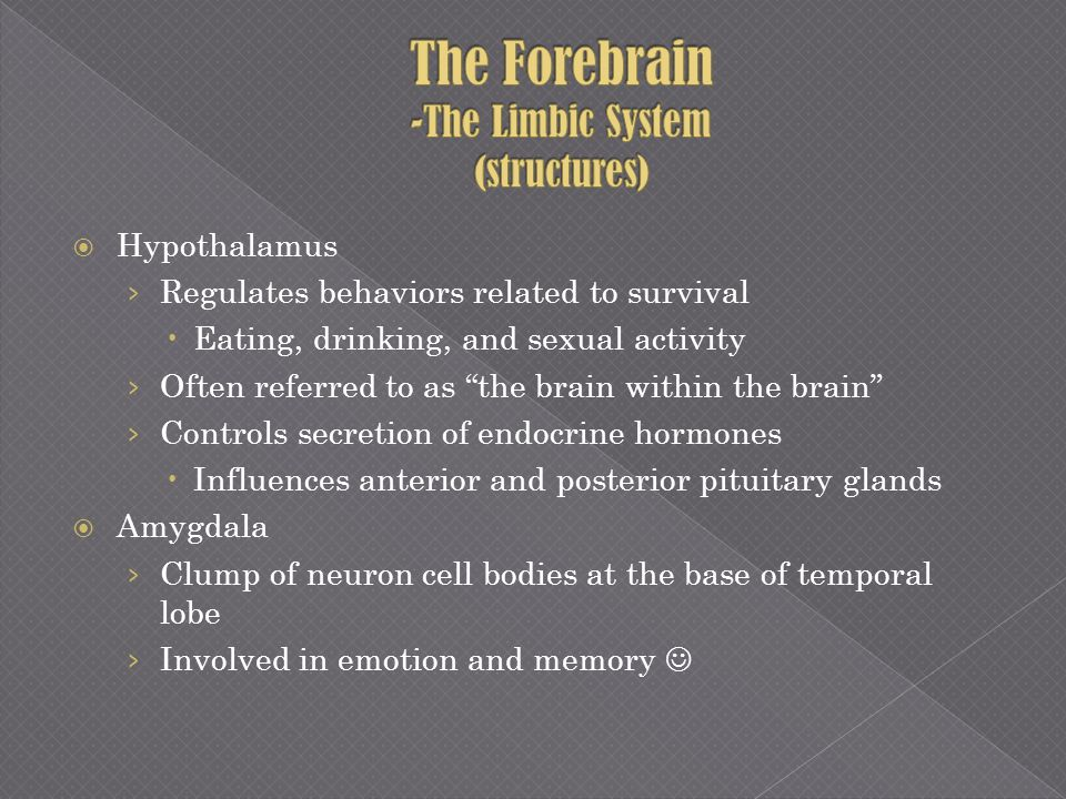 The Forebrain -The Limbic System (structures)