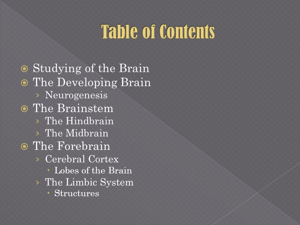 Table of Contents Studying of the Brain The Developing Brain