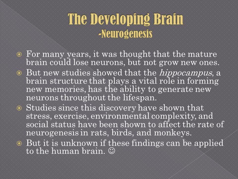 The Developing Brain -Neurogenesis