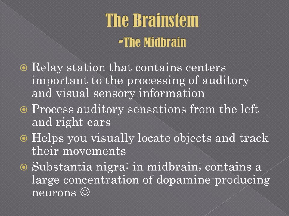 The Brainstem -The Midbrain