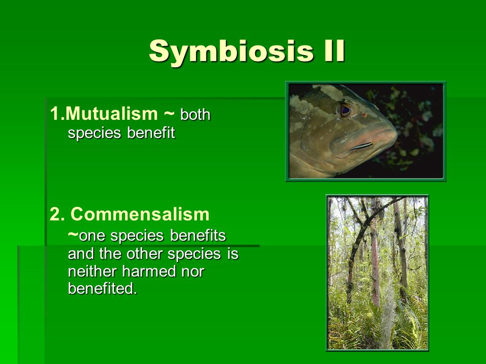 Symbiosis II 1.Mutualism ~ both species benefit