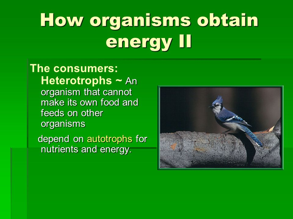 How organisms obtain energy II