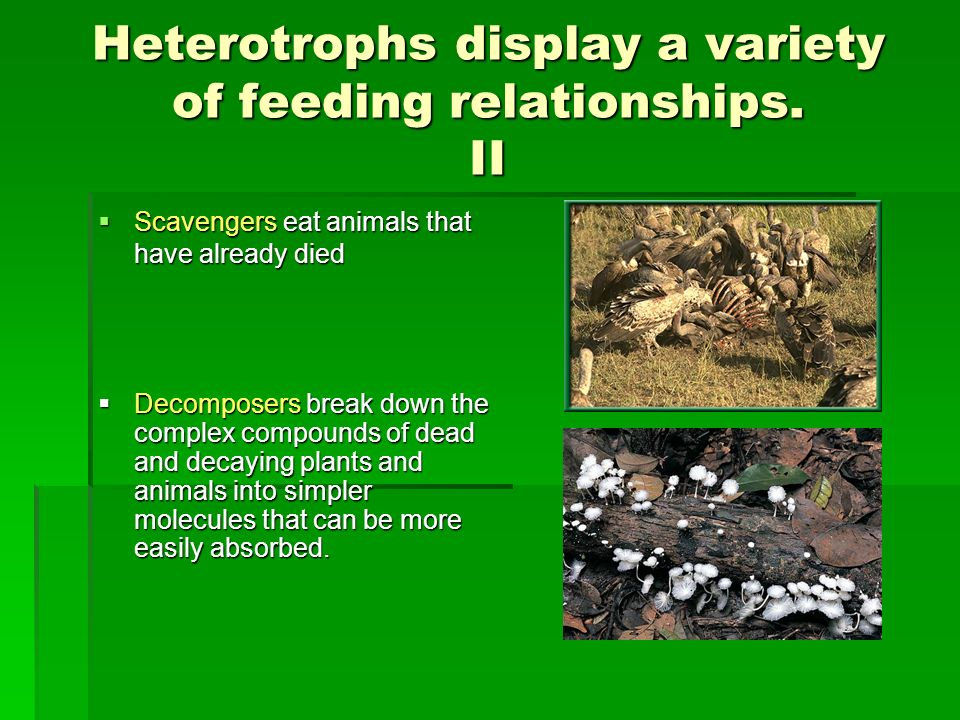 Heterotrophs display a variety of feeding relationships. II
