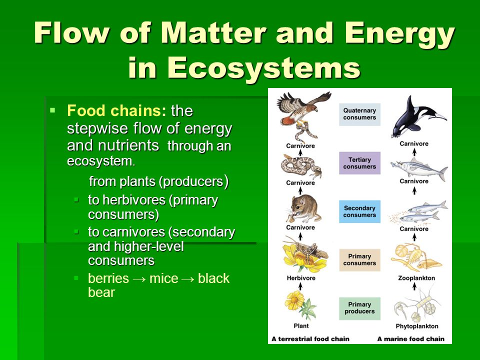 Flow of Matter and Energy in Ecosystems