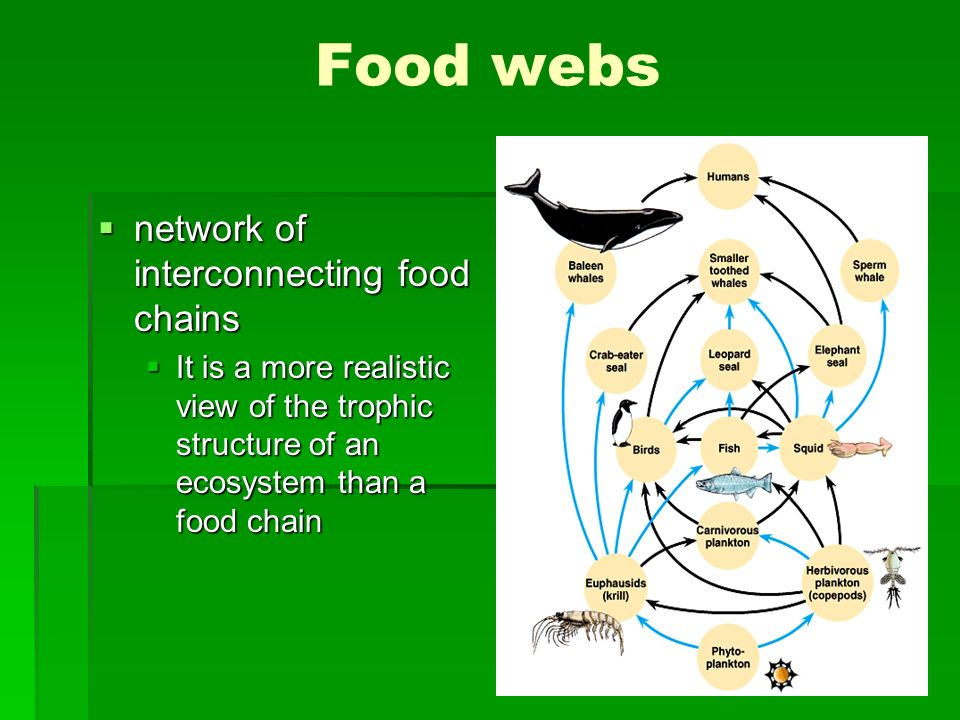 Food webs network of interconnecting food chains