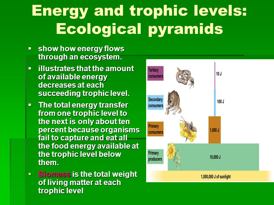 Energy and trophic levels: Ecological pyramids