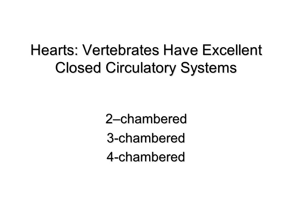 Hearts: Vertebrates Have Excellent Closed Circulatory Systems