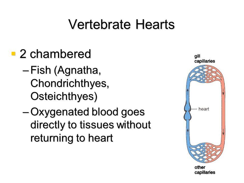 Vertebrate Hearts 2 chambered