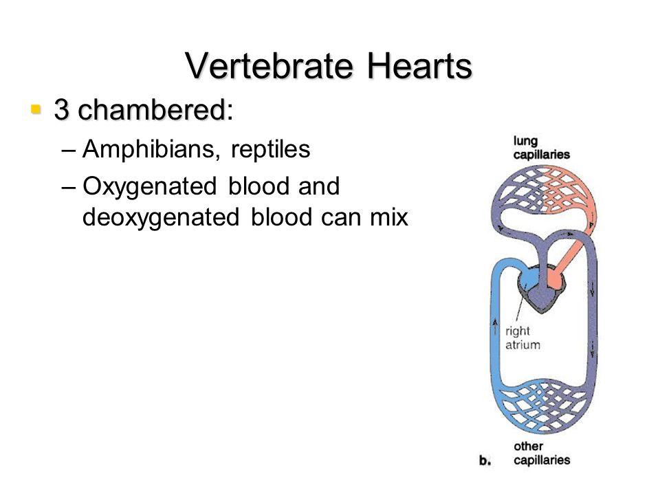Vertebrate Hearts 3 chambered: Amphibians, reptiles