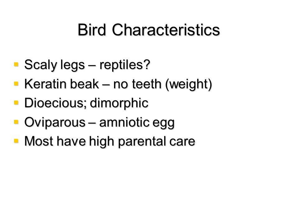 Bird Characteristics Scaly legs – reptiles