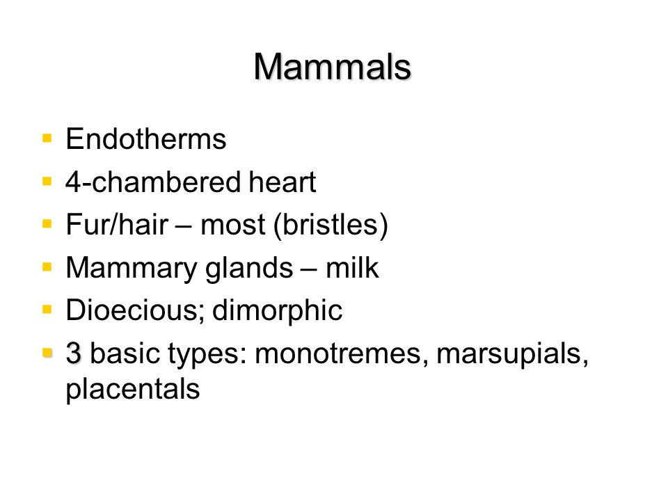 Mammals Endotherms 4-chambered heart Fur/hair – most (bristles)