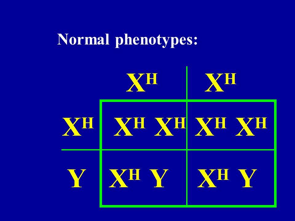 Normal phenotypes: XH XH XH XH XH XH XH Y XH Y XH Y