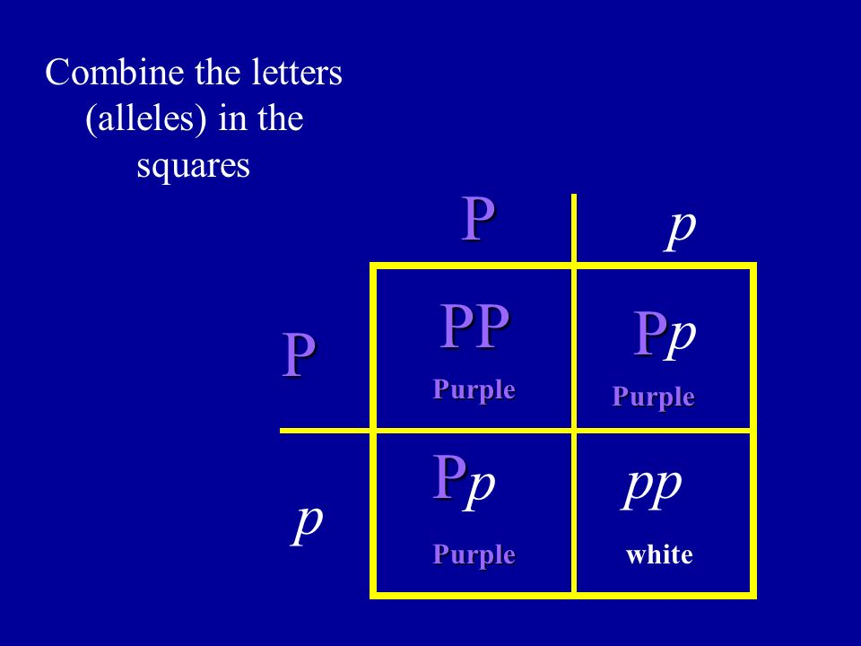 Combine the letters (alleles) in the squares