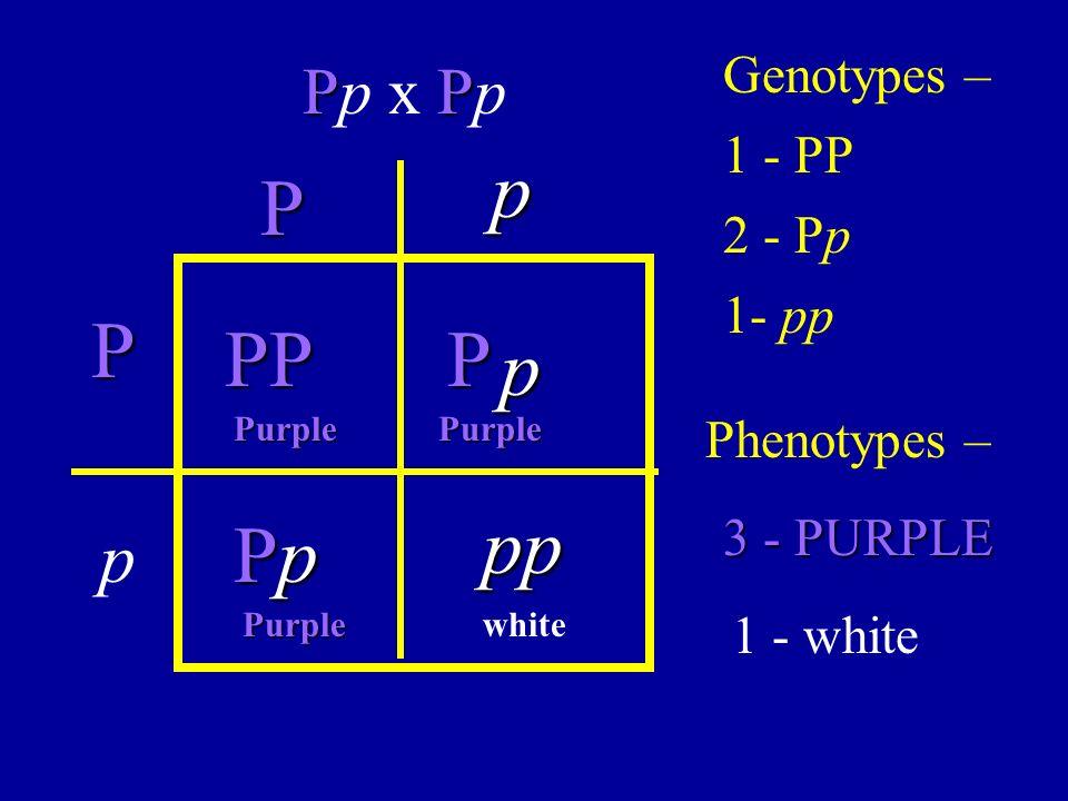 p P P PP P p pp Pp p Pp x Pp Genotypes – 1 - PP 2 - Pp 1- pp