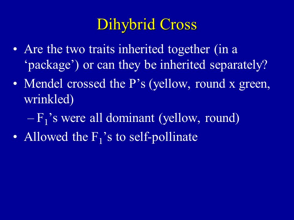 Dihybrid Cross Are the two traits inherited together (in a 'package') or can they be inherited separately