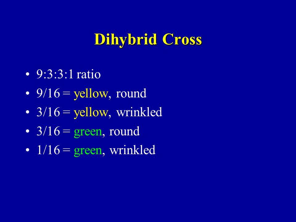Dihybrid Cross 9:3:3:1 ratio 9/16 = yellow, round