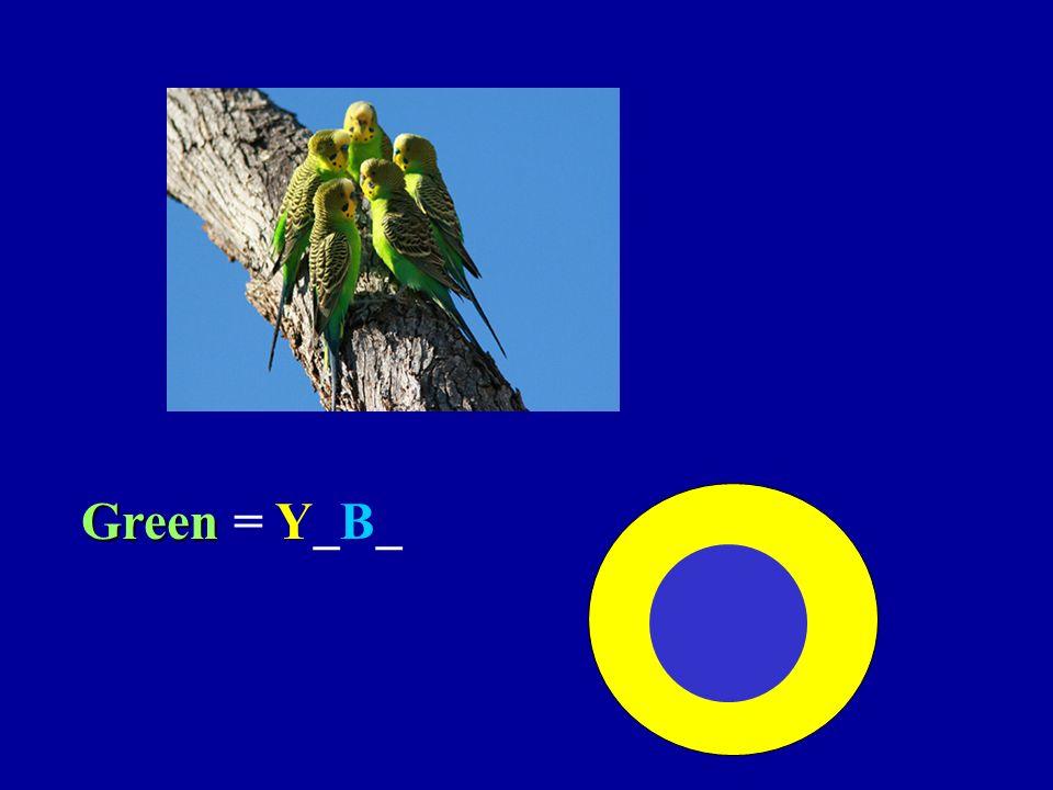 Green = Y_B_