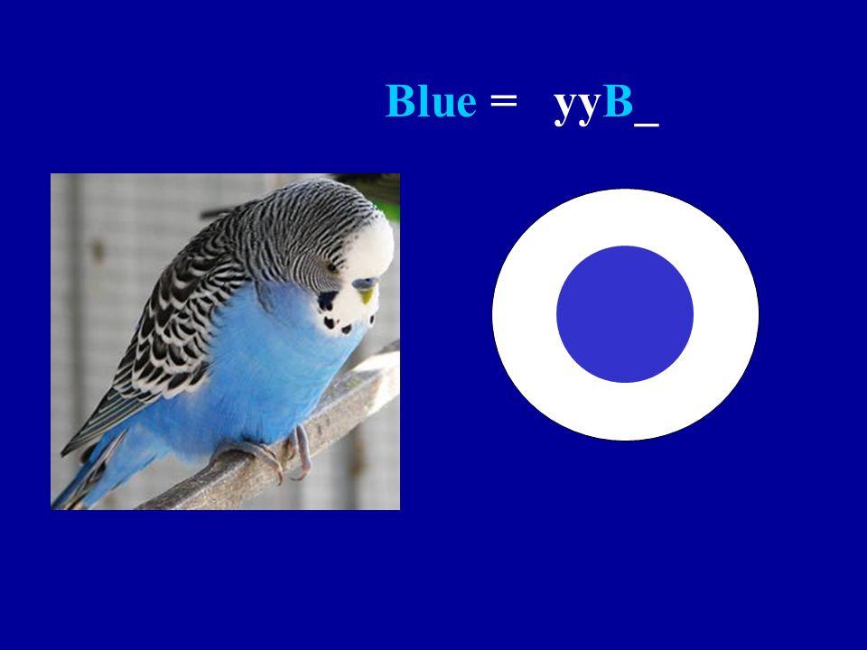 Blue = yyB_