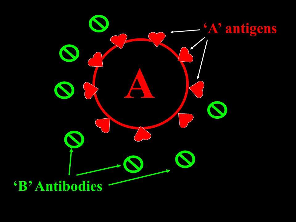 'A' antigens A 'B' Antibodies