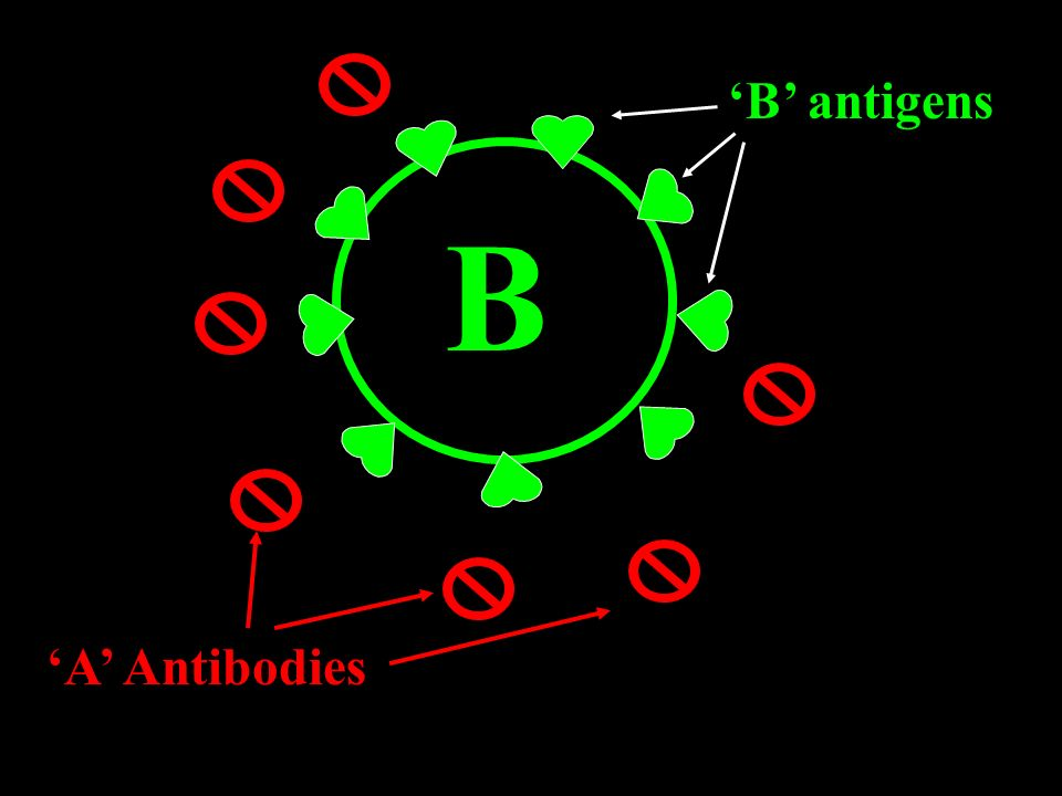 'B' antigens B 'A' Antibodies