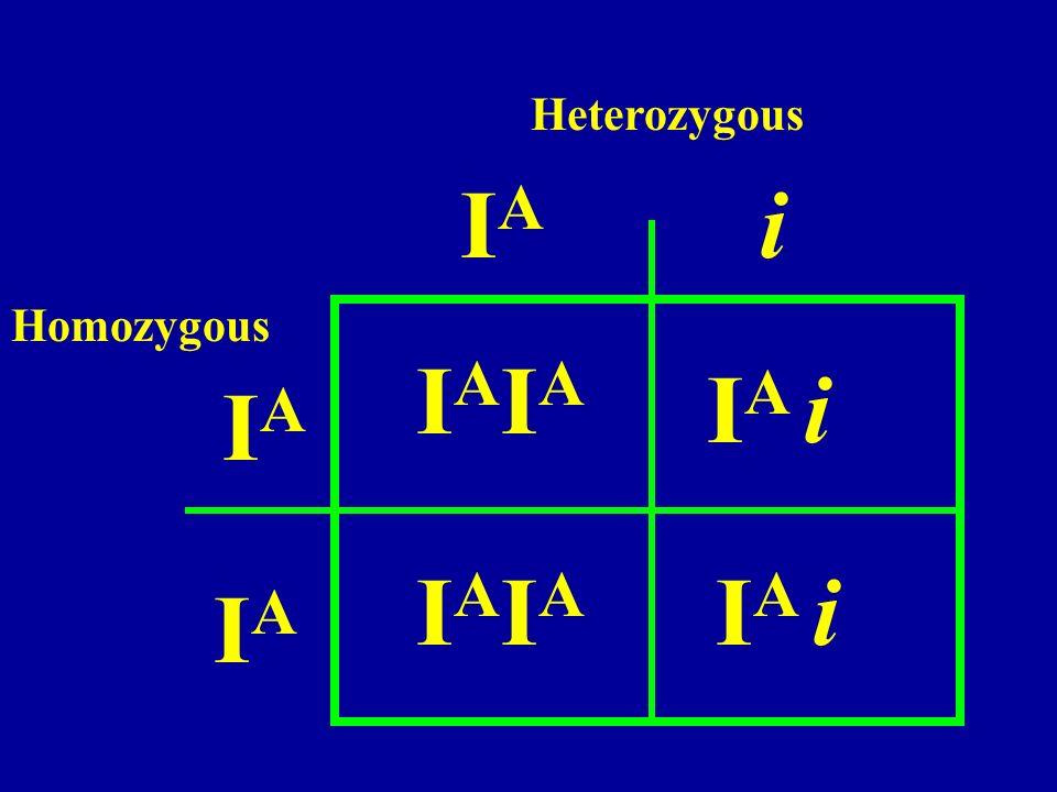 Heterozygous IA i Homozygous IAIA IA i IA IAIA IA i IA