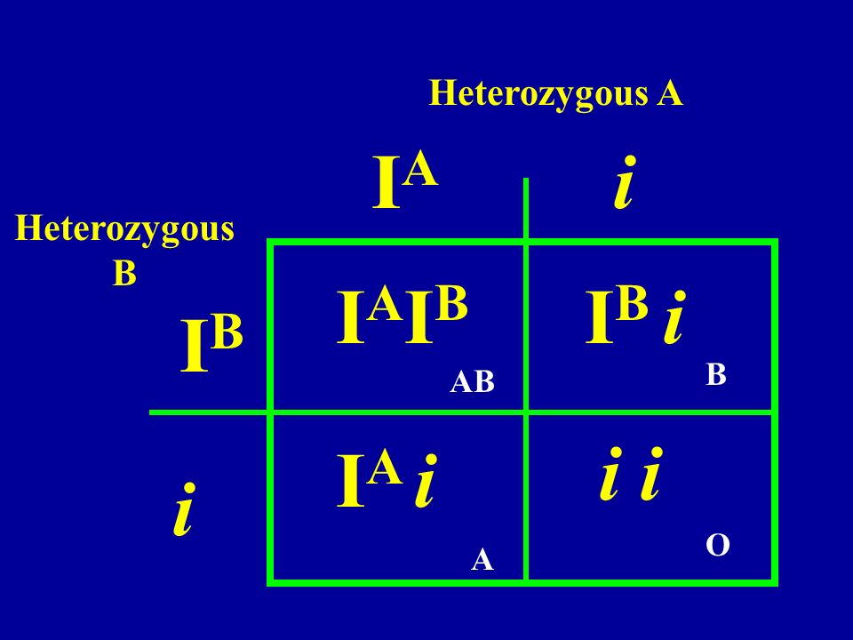 Heterozygous A IA i Heterozygous B IAIB IB i IB B AB i i IA i i O A
